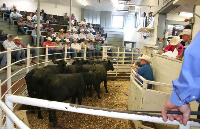A total of 4,631 head of pre-conditioned cattle went through the sale ring at the NETBIO event Wednesday. Courtesy/NETBIO