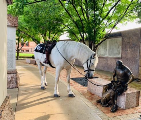"A Percheron horse ""Sarge,"" belonging to Melissa Beezley Harris, was present at Monday morning's Memorial Day services. Courtesy/Judy Jones via Derb Goodman and Pat Chase"