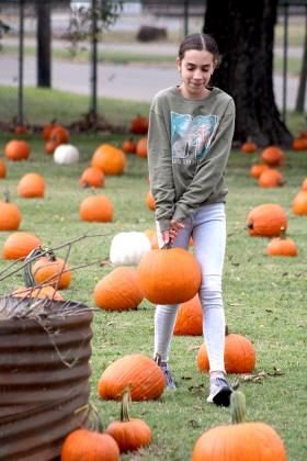 Addison Brewer, volunteer at the HCSO Pumpkin Patch, places a pumpkin in the field next to Central Baptist Church in Sulphur Springs. Staff photo by Jillian Smith