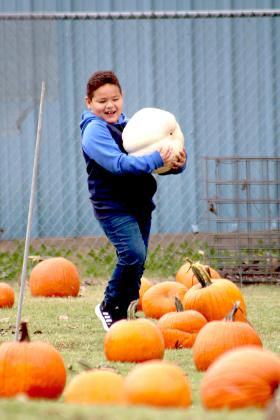 Leyden Burciaga, 4, carries one of the larger pumpkins available in the field next to Central Baptist Church at HSCO's Pumpkin Patch Saturday morning. Staff photo by Jillian Smith